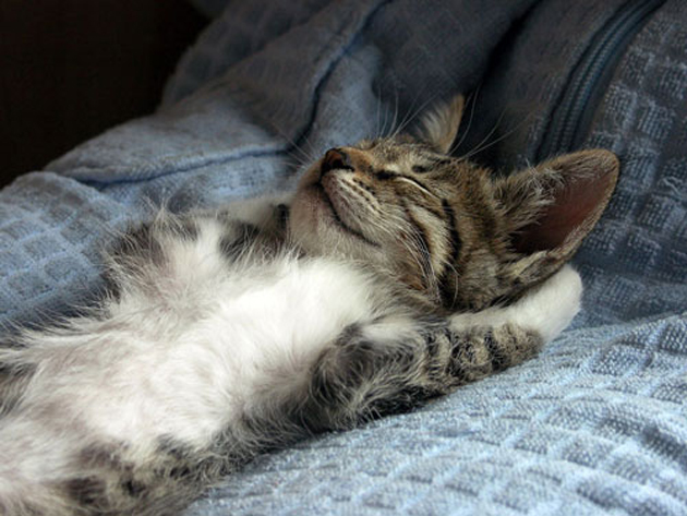 21 Cute Sleeping Cat Pictures (2)