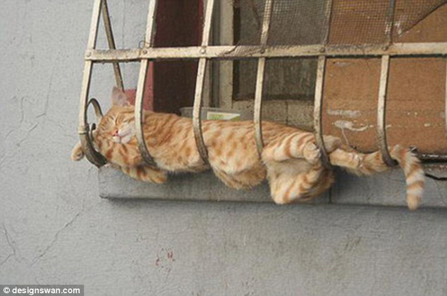 21 Cute Sleeping Cat Pictures (5)