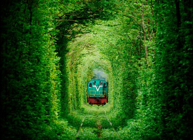 Beautiful Tree tunnels around the world (13)