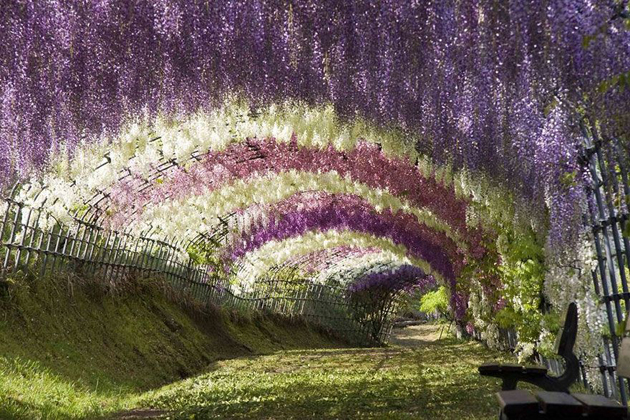 Beautiful Tree tunnels around the world (14)