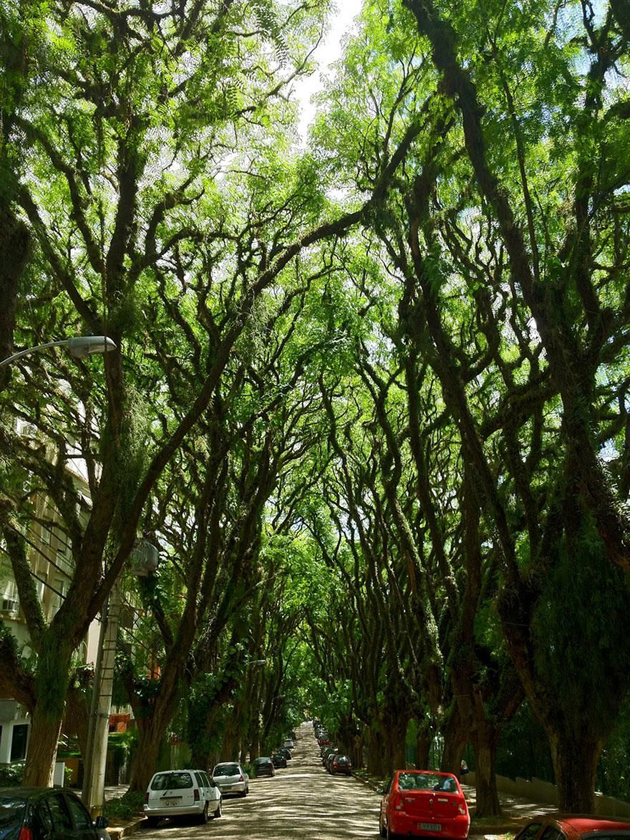 Beautiful Tree tunnels around the world (15)