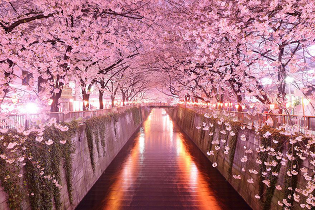 Beautiful Tree tunnels around the world (16)