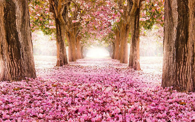 Beautiful Tree tunnels around the world (2)