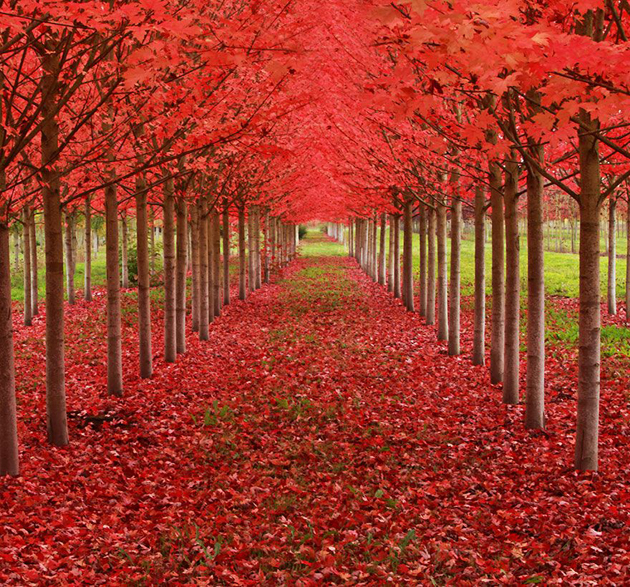 Beautiful Tree tunnels around the world (3)