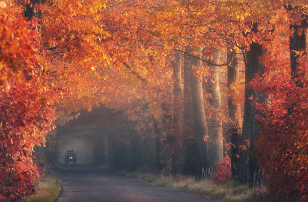 Beautiful Tree tunnels around the world (4)