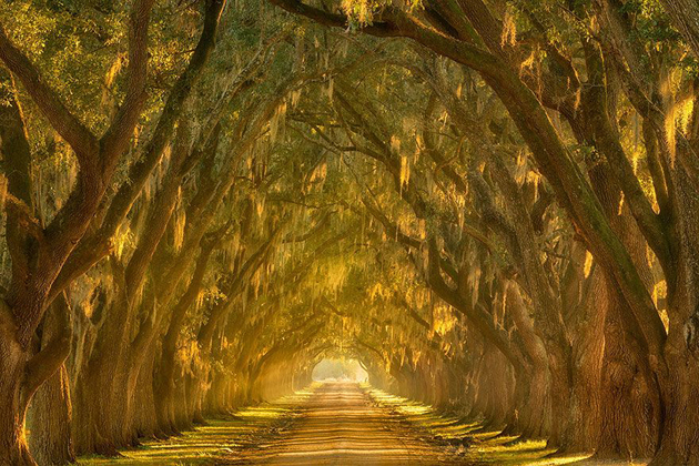 Beautiful Tree tunnels around the world (7)