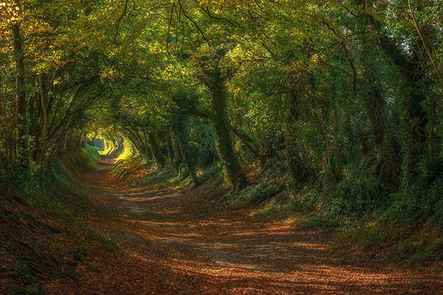 Beautiful Tree tunnels around the world (8)