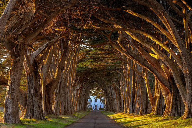 Beautiful Tree tunnels around the world (9)