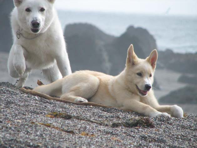 Wonderful Arctic Wolf  Pictures (14)