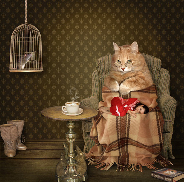 Funny cat photographs that blows your mind-A-cozy-evening...