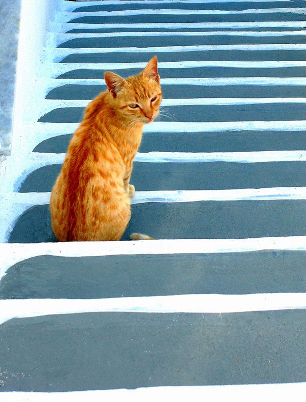 Funny cat photographs that blows your mind-Cat-on-stairs