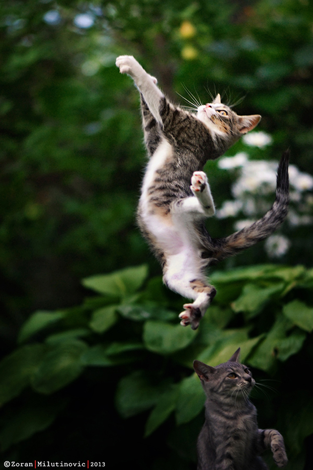 Funny cat photographs that blows your mind-Super-cat