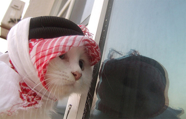 Funny cat photographs that blows your mind-arab-cat