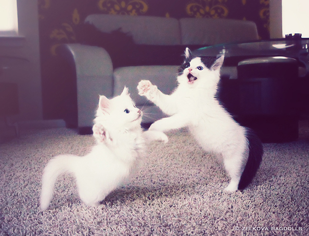 Funny cat photographs that blows your mind-dancing-cats