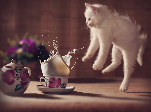 Funny cat photographs that blows your mind-oops