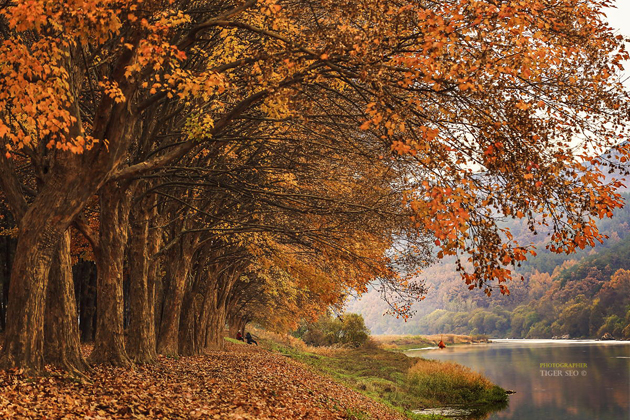 late Autumn #1 by Tiger Seo