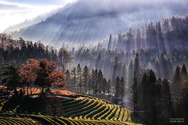 wonderful morning by Tiger Seo