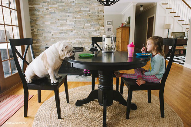 Beautiful Photos of a Little Girl and Her English Bulldog (18)