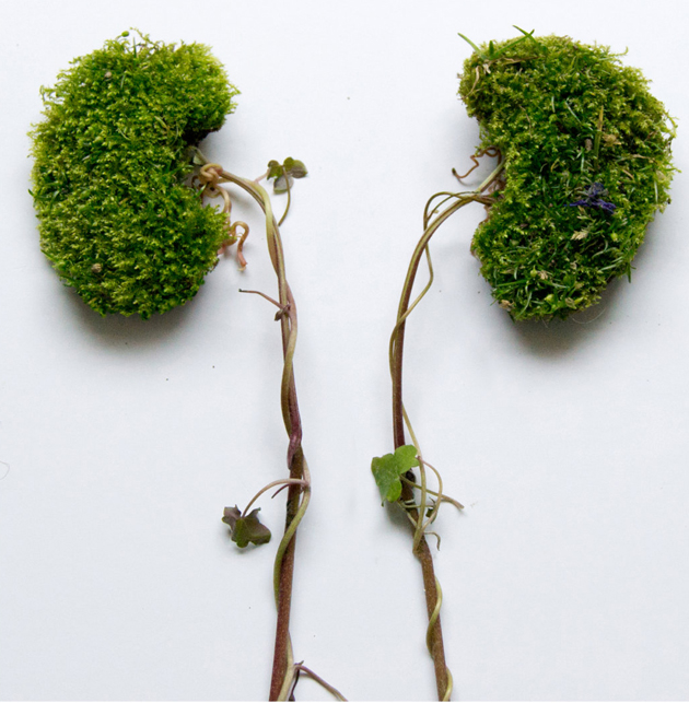 Creative Human Organs from Plants by Camila Carlow (10)