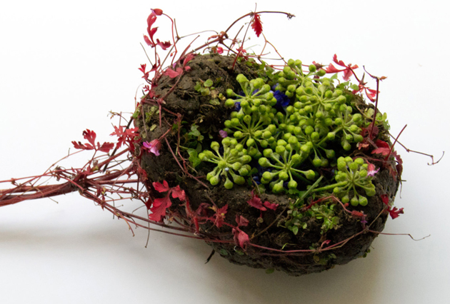 Creative Human Organs from Plants by Camila Carlow (5)