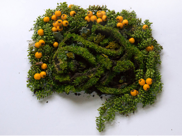 Creative Human Organs from Plants by Camila Carlow (8)