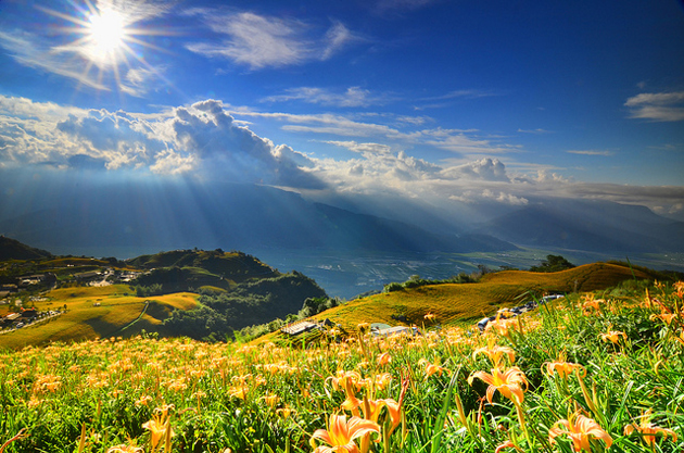beautiful and Flowers that blossom on mountain slopes (10)