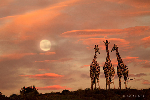African wildlife photography By Marina Cano (15)