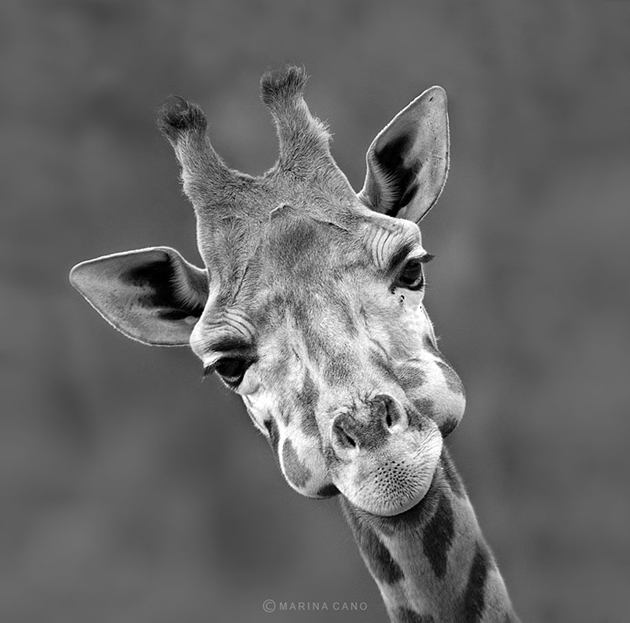 African wildlife photography By Marina Cano (2)