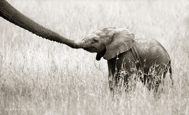 African wildlife photography By Marina Cano (3)