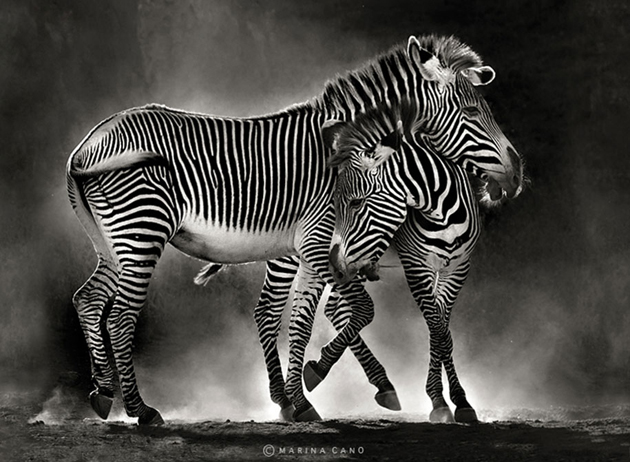 African wildlife photography By Marina Cano (4)