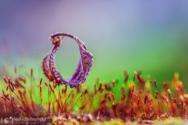 Awesome Nature Photography by Alex Greenshpun (1)