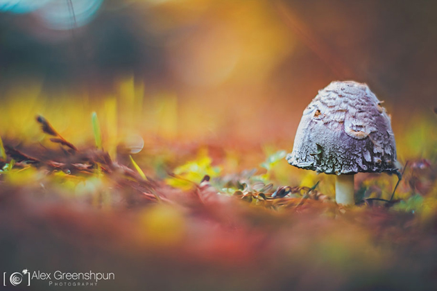 Awesome Nature Photography by Alex Greenshpun (12)