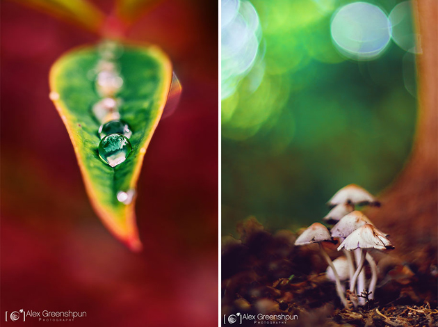 Awesome Nature Photography by Alex Greenshpun (13)