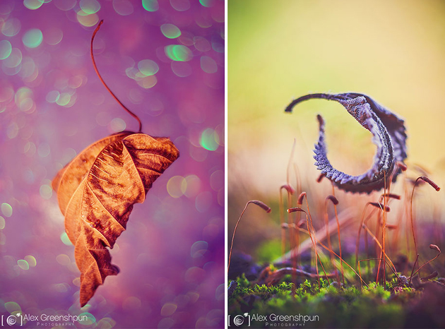 Awesome Nature Photography by Alex Greenshpun (17)