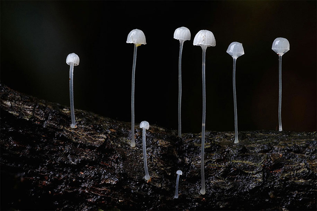 Rare collection of Mushroom by Steve Axford (3)