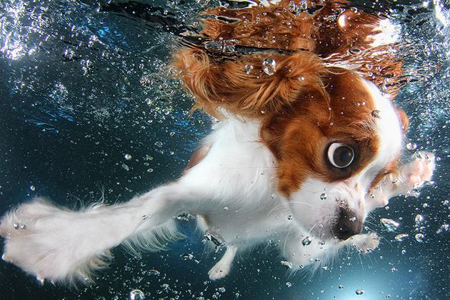 Stunning Underwater Puppy Photography By Seth Casteel (1)