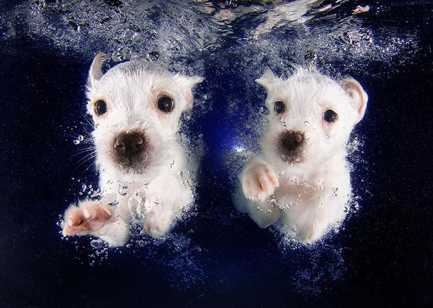 Stunning Underwater Puppy Photography By Seth Casteel (2)