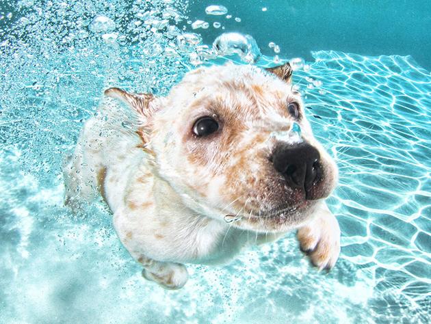 Stunning Underwater Puppy Photography By Seth Casteel (4)