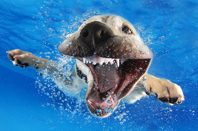 Stunning Underwater Puppy Photography By Seth Casteel (5)