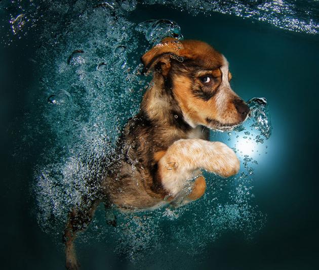 Stunning Underwater Puppy Photography By Seth Casteel (9)
