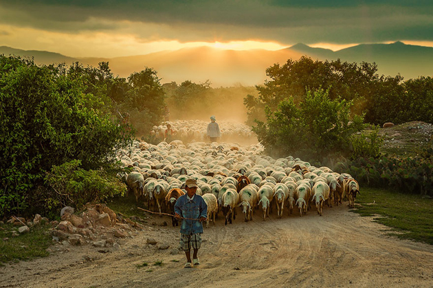 25 Photos Of Sheep Blanketing The Earth  (10)
