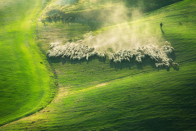 25 Photos Of Sheep Blanketing The Earth  (14)