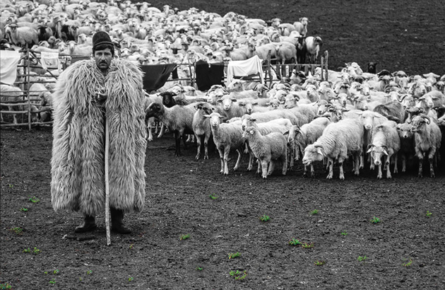 25 Photos Of Sheep Blanketing The Earth  (17)