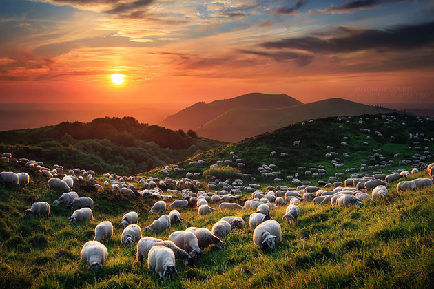 25 Photos Of Sheep Blanketing The Earth  (18)