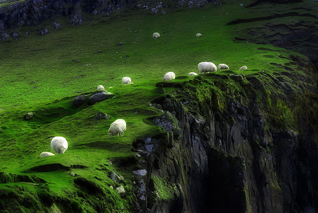 25 Photos Of Sheep Blanketing The Earth  (19)