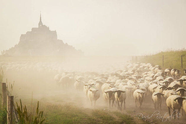25 Photos Of Sheep Blanketing The Earth  (20)