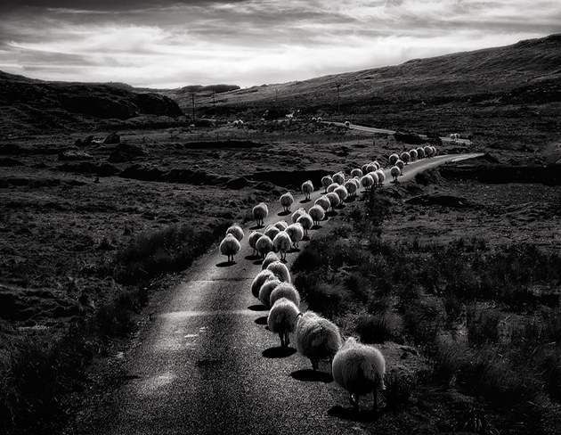 25 Photos Of Sheep Blanketing The Earth  (9)
