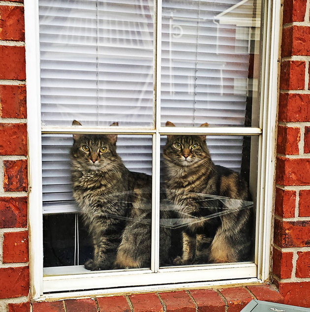 Fine-looking Photos of Animals Looking through Windows (10)