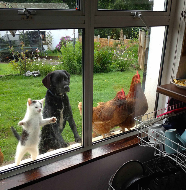 Fine-looking Photos of Animals Looking through Windows (12)