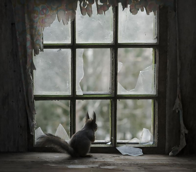 Fine-looking Photos of Animals Looking through Windows (13)